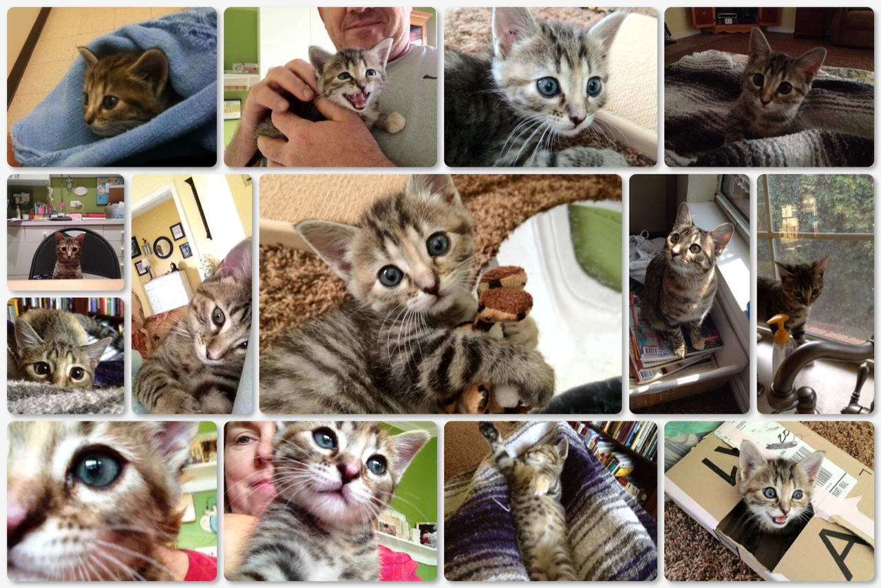How to Raise a Kitten – one january day